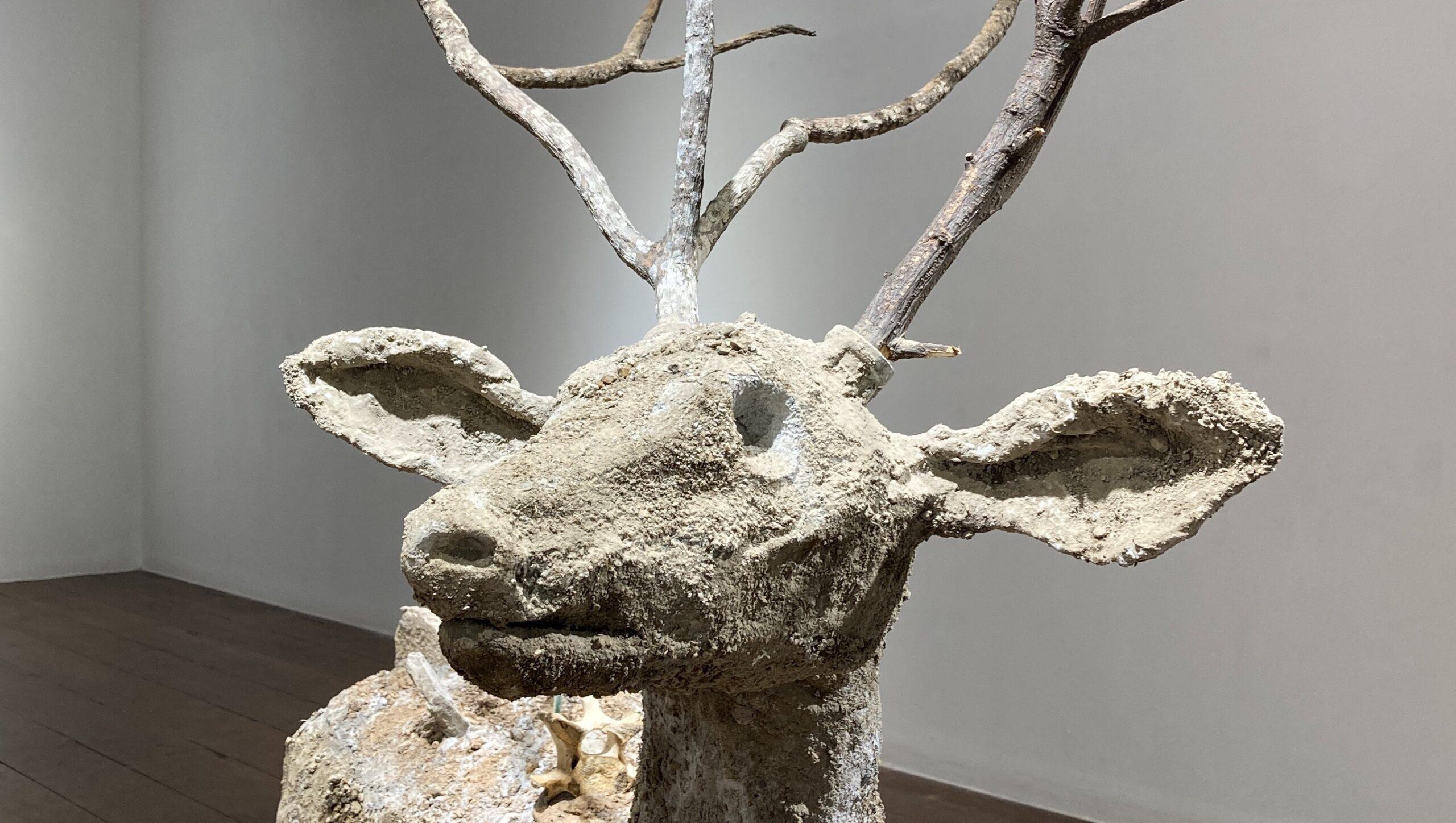 Schomburgk Deer